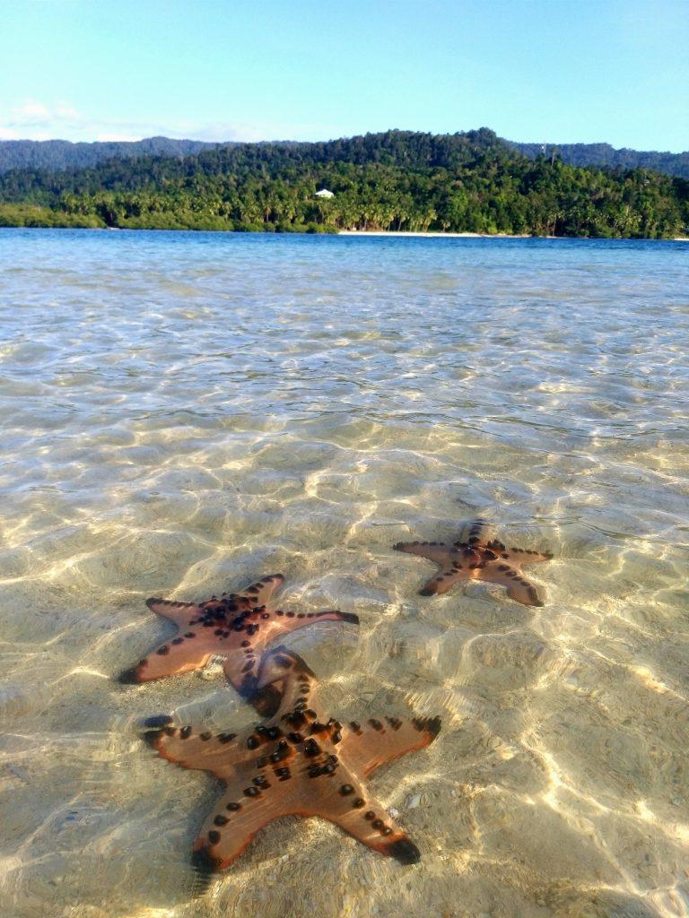 Seesterne auf sandbank bei ebbe in port barton