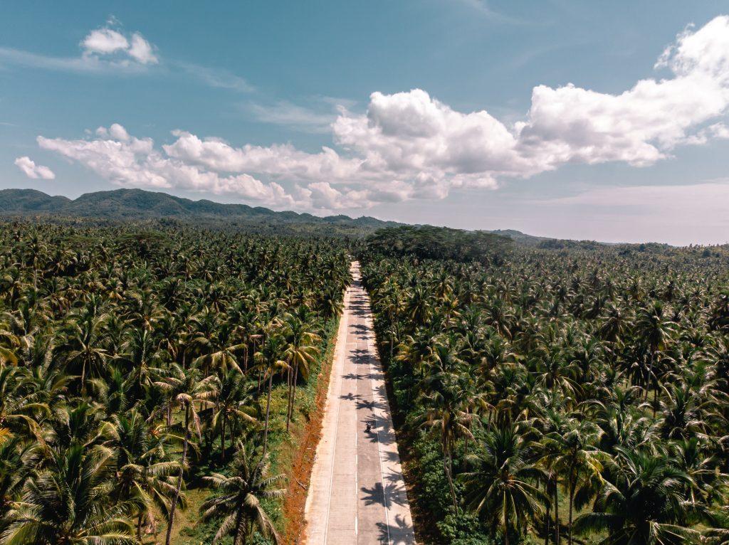straße von siargao umgeben von palmen