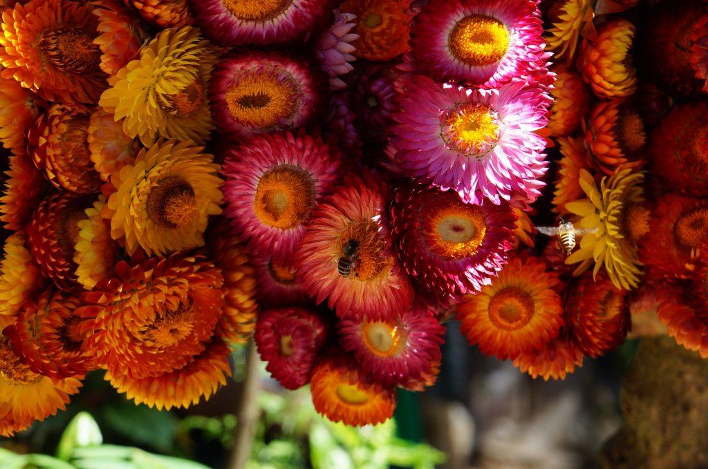 Blumenkranz in Baguio