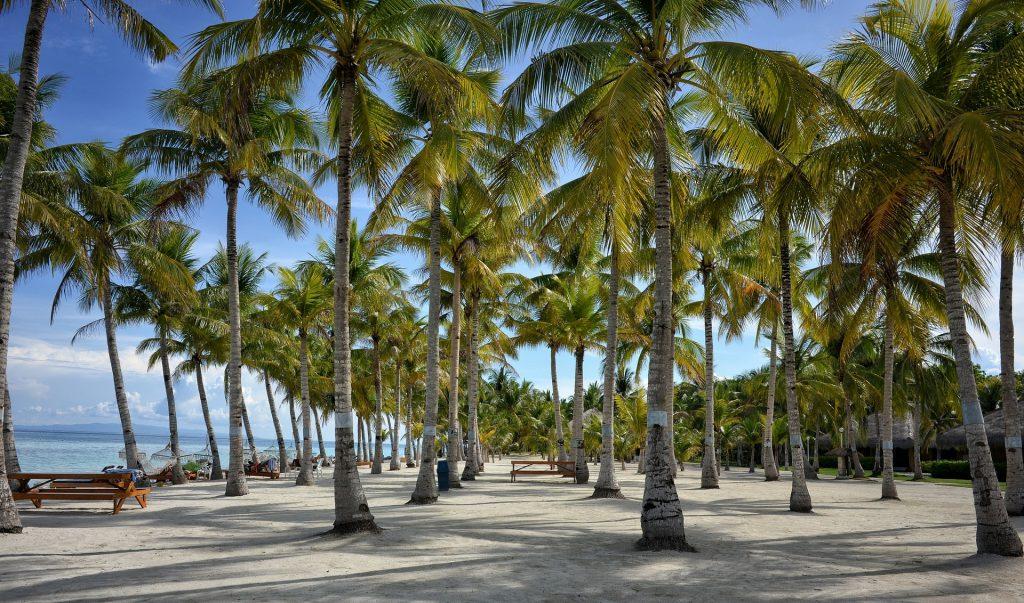 Palmen beim Alona Beach auf Bohol