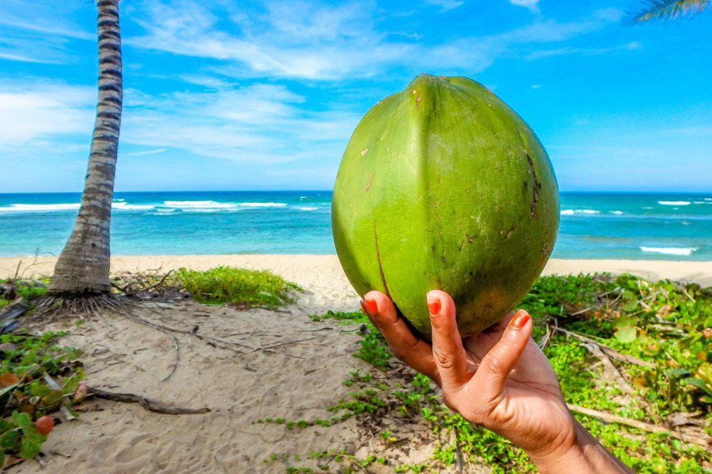 kokussnuss amd coconut beach bei port barton