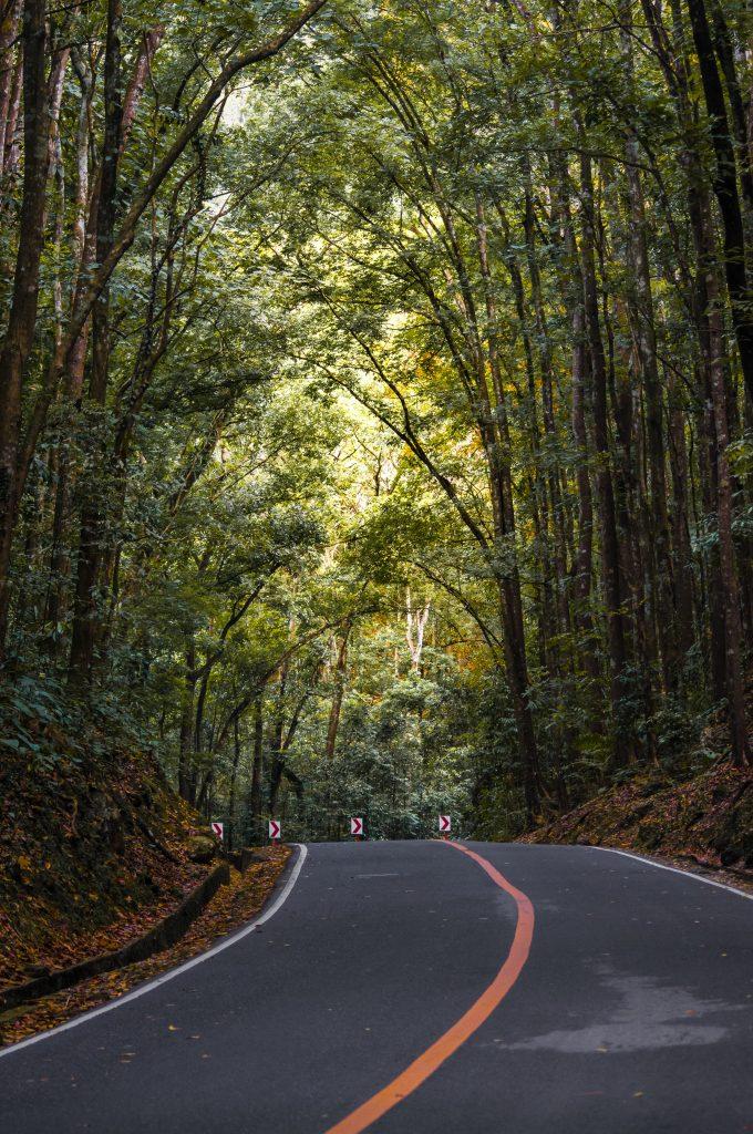 Straße in Bohol am Man made Forest