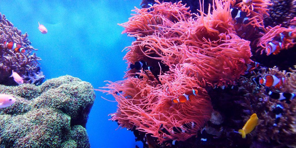 bunte korallen und Fische unterwasser beim Tauchen in mindoro