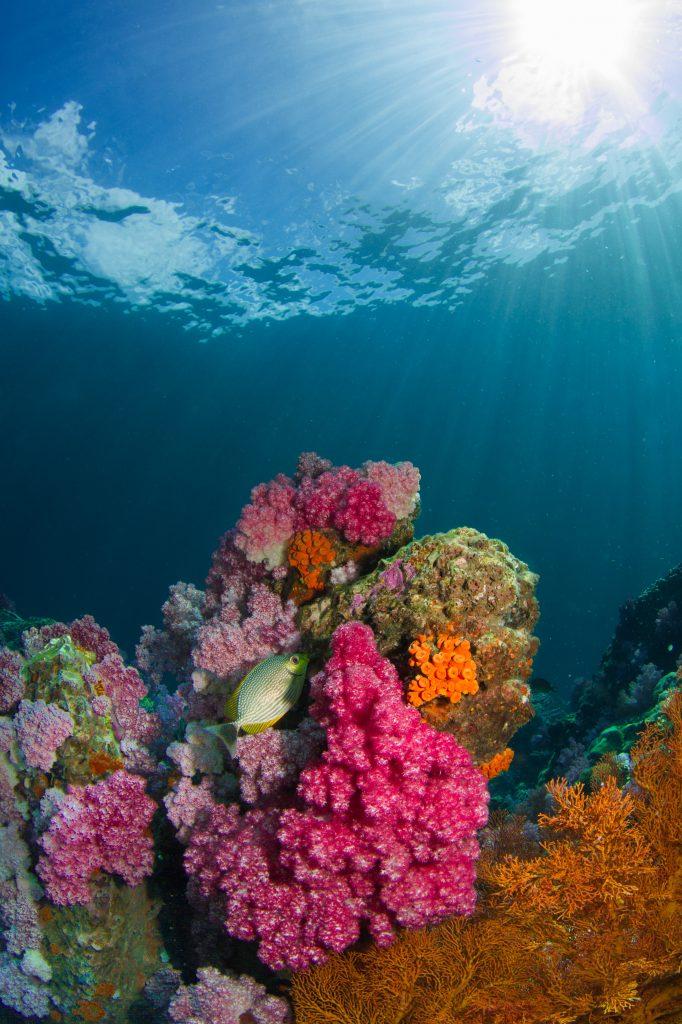 bunte korallen mit Fischen