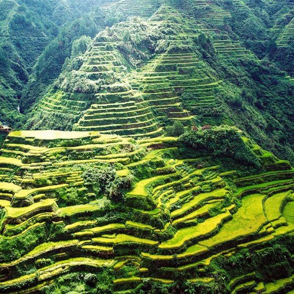 Reisfelder von Banaue Nord Luzon
