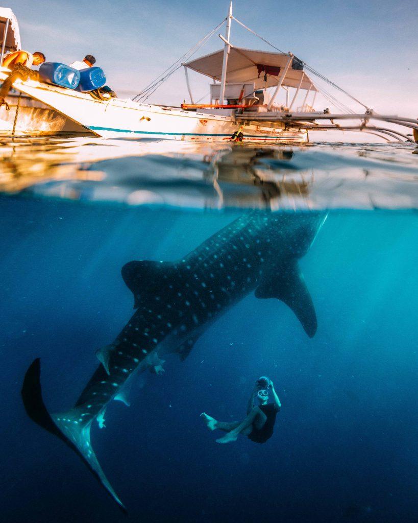 Cebu walhai am Boot- Philippine Department of Tourism ©Jacob Riglin