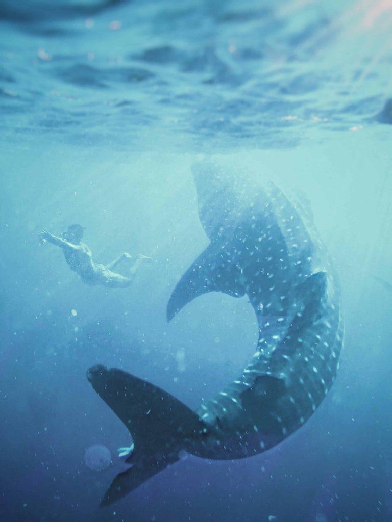 Schwimmen mit Walhaien -Philippine Department of Tourism ©James Relf Dyer