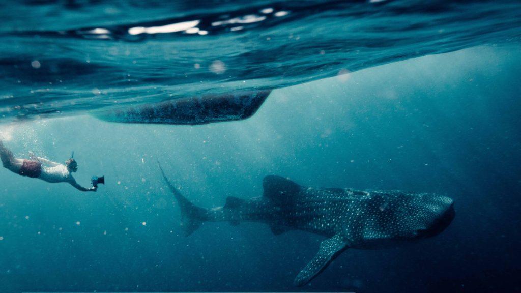 Schwimmen mit Walhaien- Department of Tourism ©sam_kolder