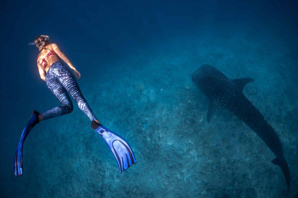 Schnorcheln mit Walhaien-©sebastian-pena-lambarri via Unsplash